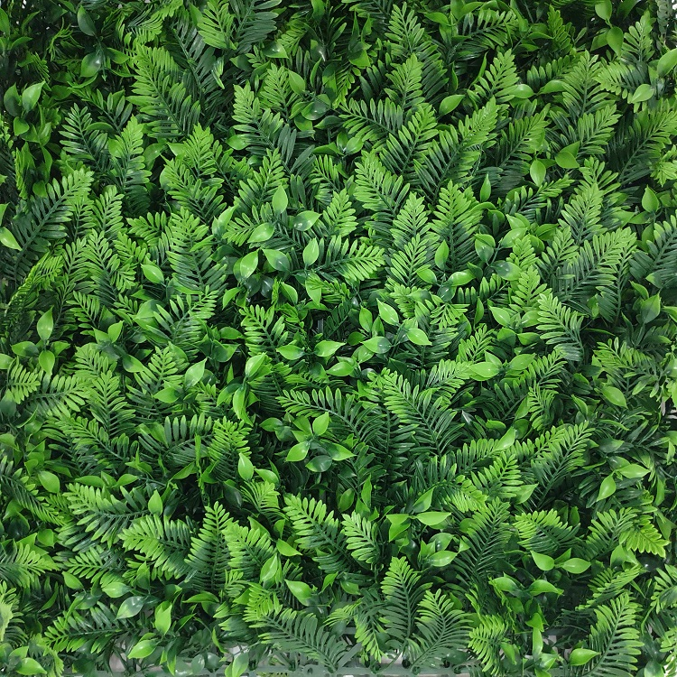 Nepplanten Wand Leptinella
