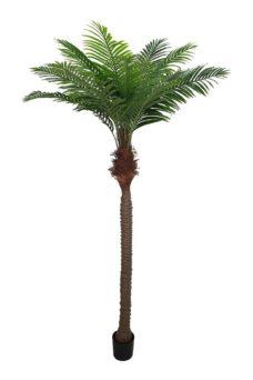Nep Palmboom Bermuda