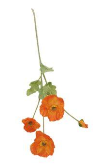 Nep Klap Roos Oranje