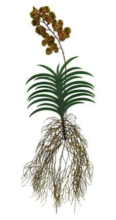 Bruin Gele Hang Kunst Orchidee 125cm