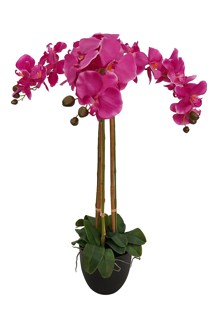 Grote Paarse Nep Orchidee
