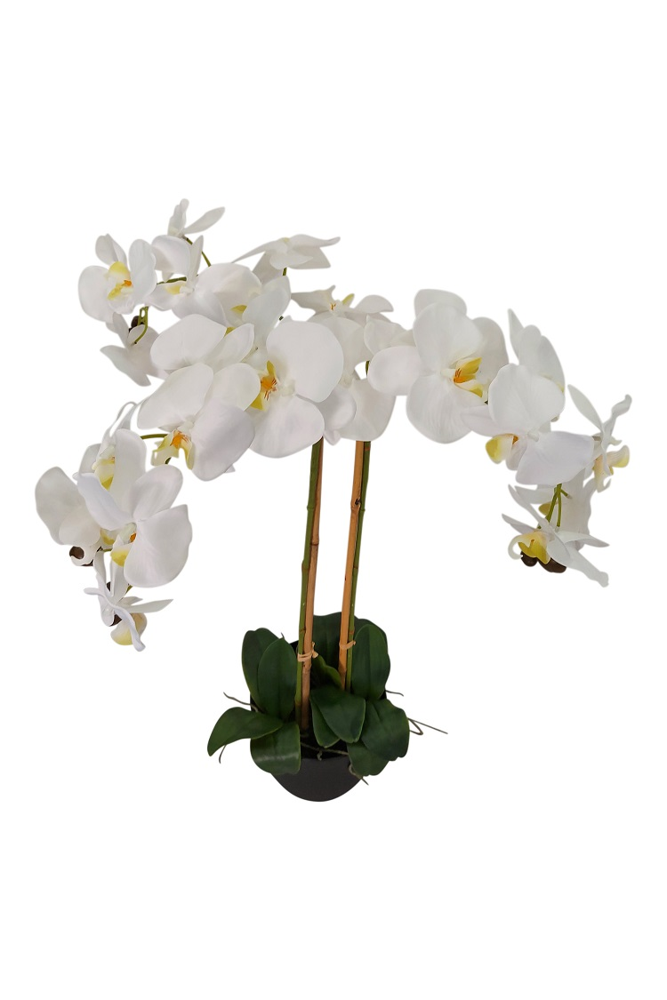 Grote Witte Nep Orchidee