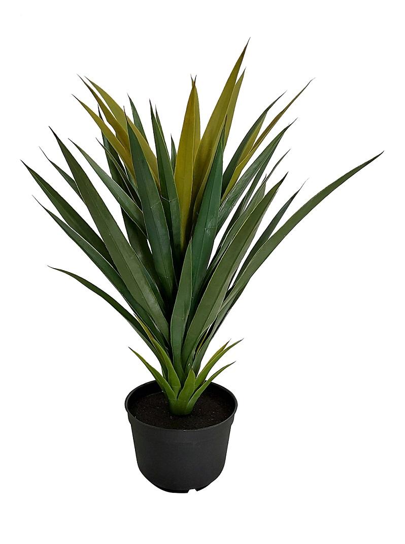 Smalblad Nep Yucca 60cm