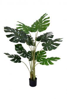 Grote Nep Gatenplant In Pot 135cm