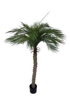 Kunstpalm Hawaii 155cm