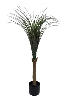 Smalblad Palmboompje 110cm