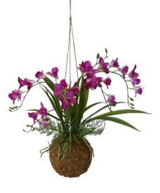 Kunst Kokodama Orchidee Fucsia 50cm