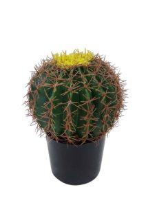 Namaak Bolcactus In Pot 25cm